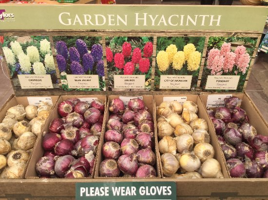 Holt, UK: Time to think about which bulbs to plant in the garden