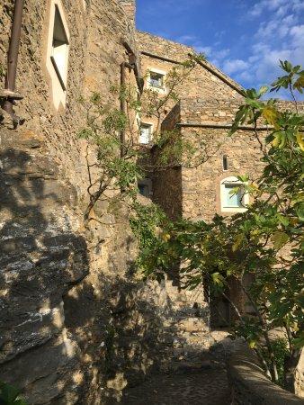 Castelbianco, Italie : Fichi selvatici