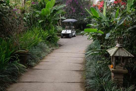 Gobleg, Indonesien: Buggy service is available