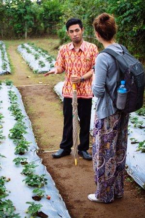 Gobleg, Indonesien: Daily walk around the plantation