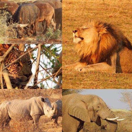 Madikwe Game Reserve, Zuid-Afrika: Madikwe Safari Lodge