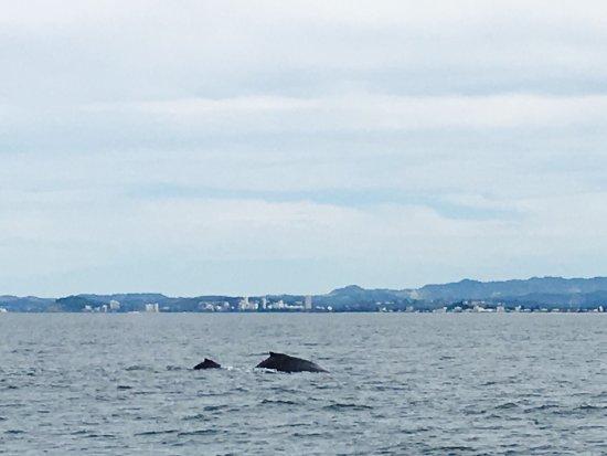 Spirit of Gold Coast Whale Watching: photo2.jpg