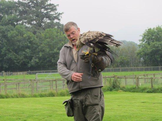 The Lake District Wildlife Park: Bird of Prey Talk