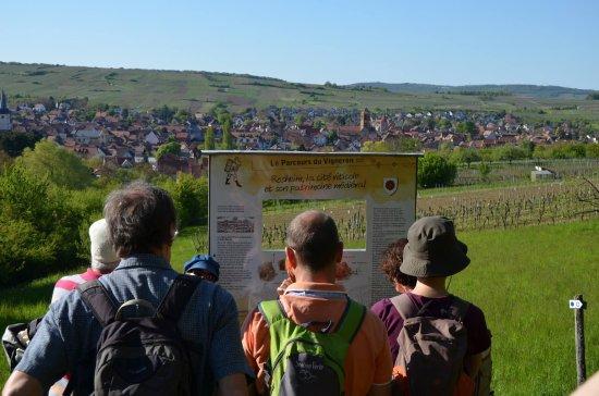 Le parcours du vigneron - ©DWOLFF_OT Rosheim