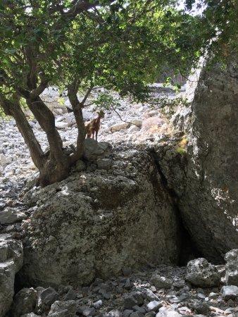 Creta, Grecia: photo1.jpg