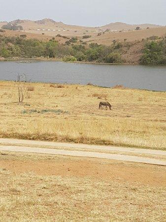 Muldersdrift, แอฟริกาใต้: 20160917_101339_large.jpg