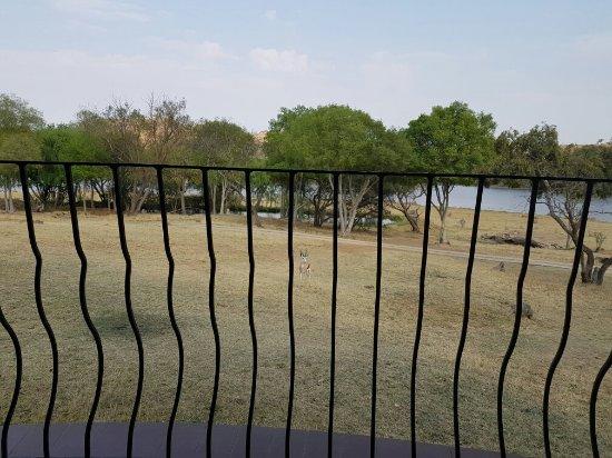 Muldersdrift, แอฟริกาใต้: 20160917_080806_large.jpg