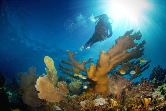 Ocean Divers: A short 20 minute boat ride and you'll be diving amazing reefs like these