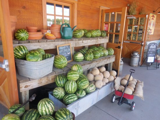 Lafayette, CO: Melons, more melons, it;s that time of the year.