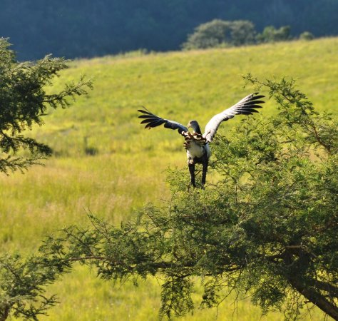 Bergville, Sudáfrica: Birdlife and game on property