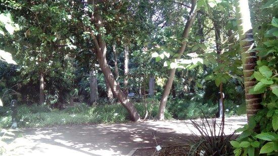 Jardin Botanico: DSC_1162_large.jpg
