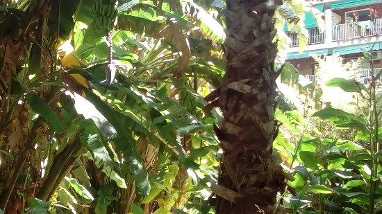 Jardin Botanico: DSC_1163_large.jpg