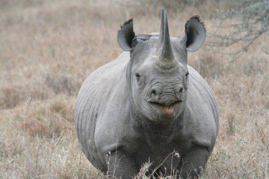 The Emakoko: Black Rhino at NNP