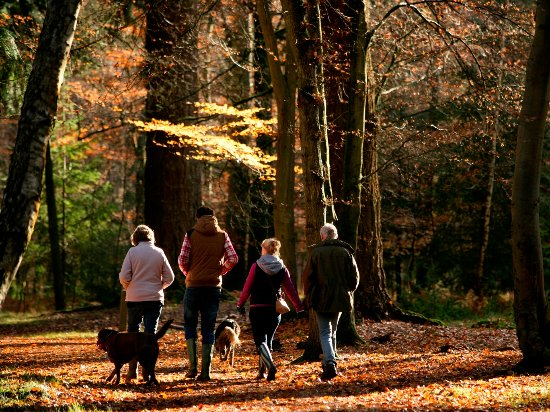 New Forest National Park Hampshire, UK: Dog Walking in the New Forest