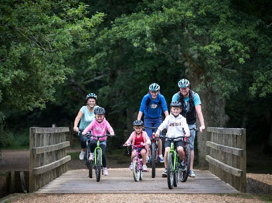 New Forest National Park Hampshire, UK: Cycling in the New Forest