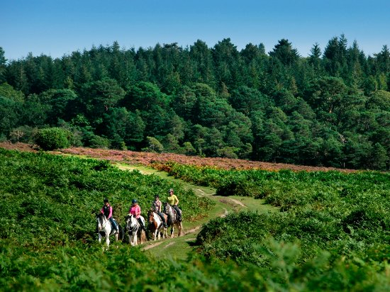 New Forest National Park Hampshire, UK: Horse Riding in the New Forest