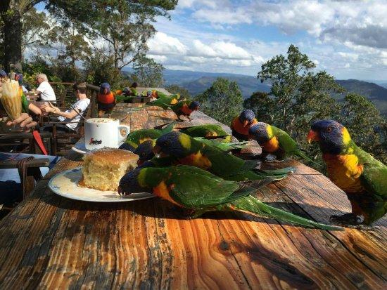 North Tamborine, Australien: received_1769850893256897_large.jpg