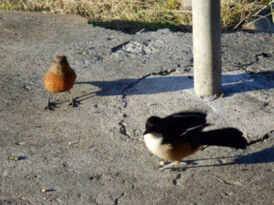 uKhahlamba-Drakensberg Park, Südafrika: Desayuno en el porche