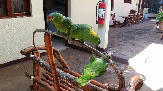 Art Hotel Managua: 20160920_084258_large.jpg