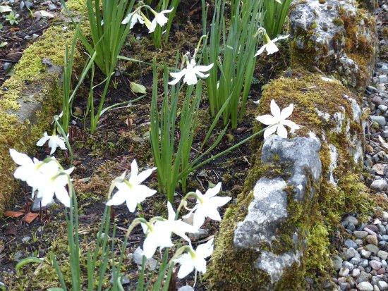 Carron, Ирландия: more late flowering