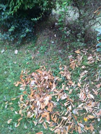 Le Tronchet, Frankrike: Branchage taillé et laissé au sol
