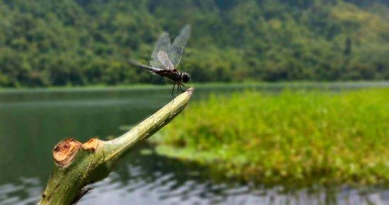 Tirimbina, Kostaryka: fotos