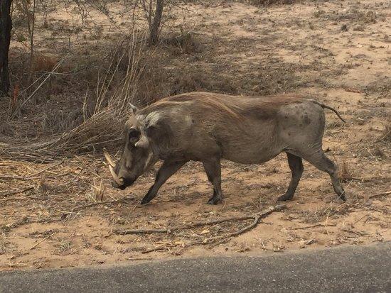 Parco nazionale di Kruger, Sudafrica: photo5.jpg