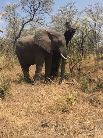 Parco nazionale di Kruger, Sudafrica: photo6.jpg