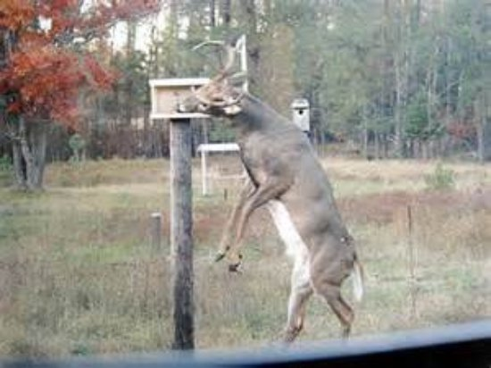 The Boulder Junction Community is home to plenty of wildlife visible from our deer-viewing rooms