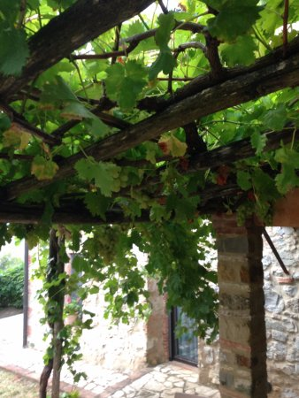 Casole d'Elsa, Italia: Outside one of the rooms. Grapes growing on vines!