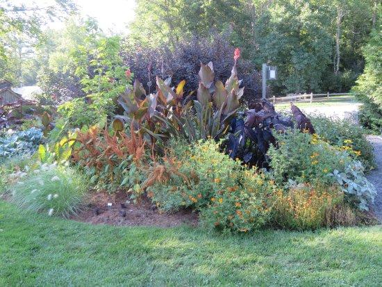 Berkshire Botanical Garden: Colorful.