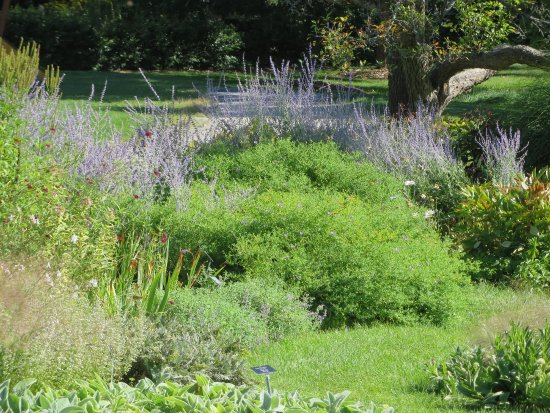 Berkshire Botanical Garden: Russian sage.