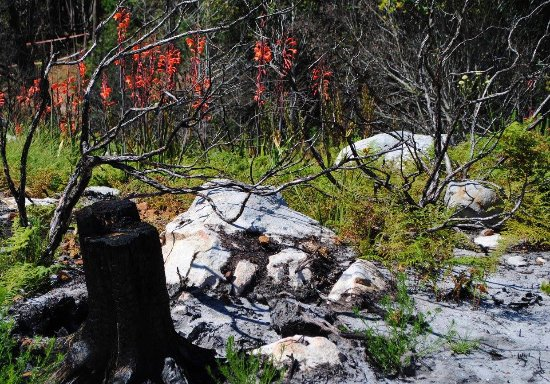 Silvermine Nature Reserve: New life after fire.