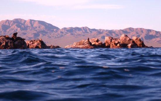 Isla Los Islotes: photo2.jpg