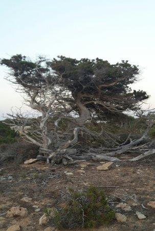 Punta Rasa: La natura attorno