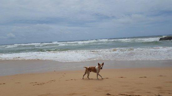 بينتوتا, سريلانكا: 20160918_124109_large.jpg