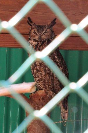 Gray, ME: Owl.
