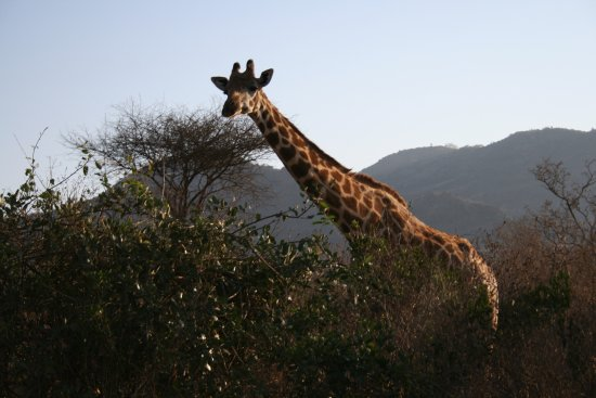 F. King Tours and Safaris - Day Tours: Tasvo West