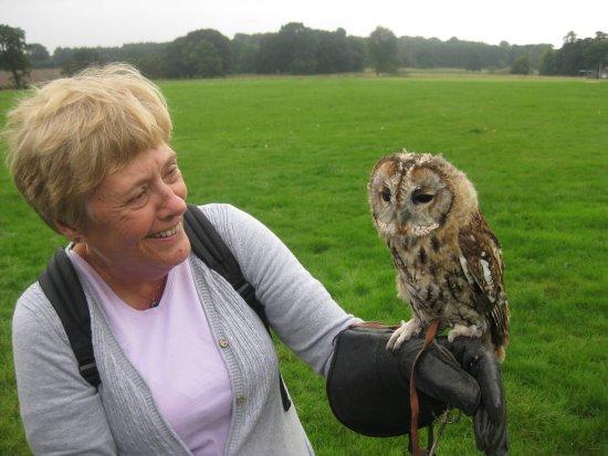 Newark-on-Trent, UK: Tawny owl