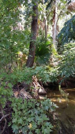 Winter Park, FL: Mead Garden