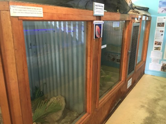 Cook Islands Whale and Wildlife Centre : Crab tanks