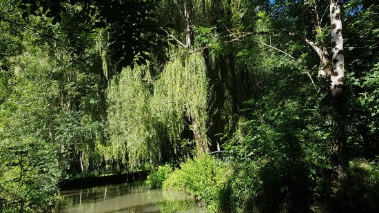Arcais, France: Végétation à foison