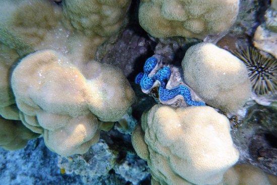 Mai Kai Bora Bora : Shell