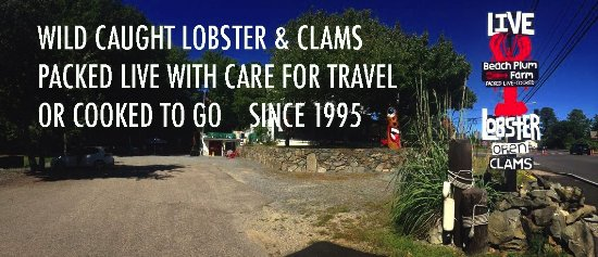 Beach Plum Lobster Farm: IN MAINE THIS IS CONSIDERED BETTER THAN A RESTAURANT