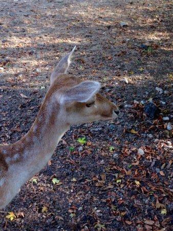 Wildpark Christianental: Damwild aus dem Christianentalpark in Wernigerode