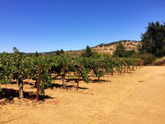Rutherford, CA: Frog's Leap Winery