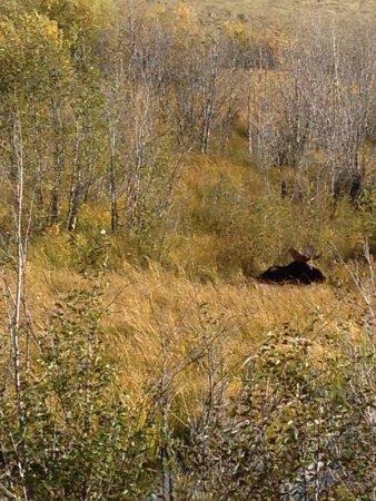 Moose Wilson Road: photo5.jpg