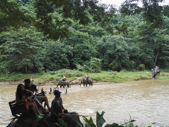 Thai Elephant Conservation Center: IMG_20160816_093418_large.jpg