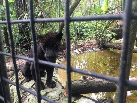 The Belize Zoo: photo0.jpg