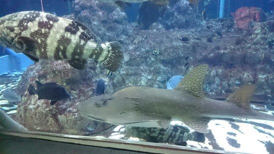 Kochi Prefectural Ashizuri Kaiyokan Aquarium